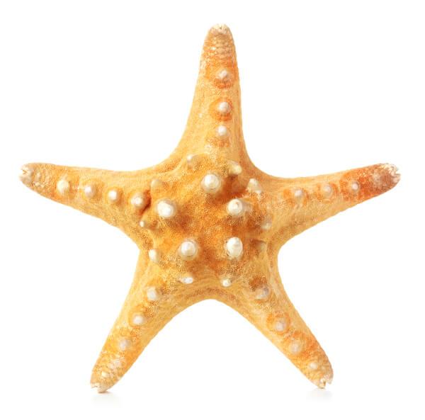 rozgwiazda tło